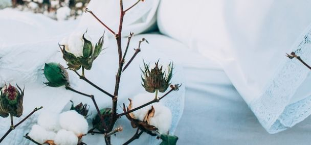 Bed with cotton sheets and pillows next to cotton branches